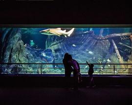 Sochi Dicovery World Aquarium