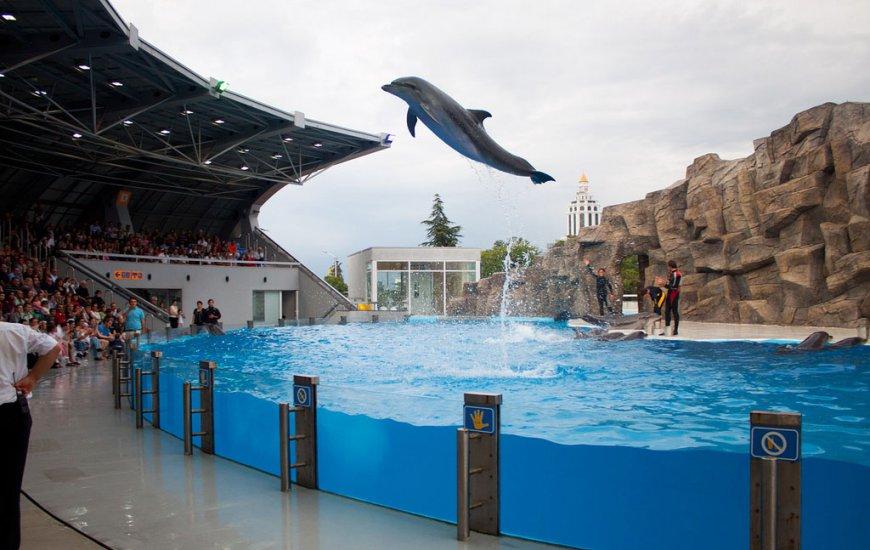 Dolphinarium Batumi Sightseeing In Batumi