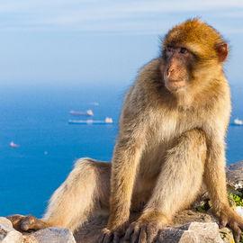 Gibraltar/